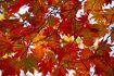 2015紅葉の大沼へ(その2)