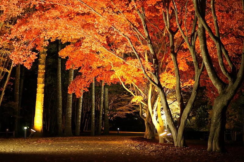 夜の香雪園